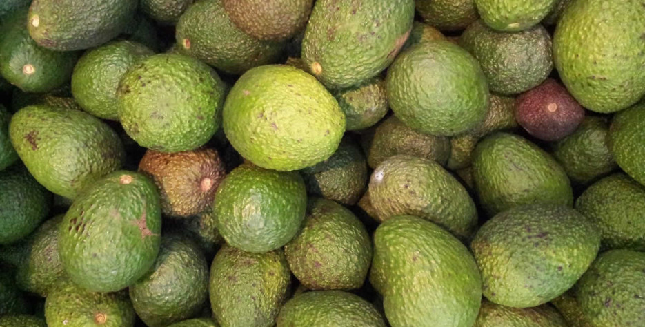 National Guacamole Day around the world in 2022