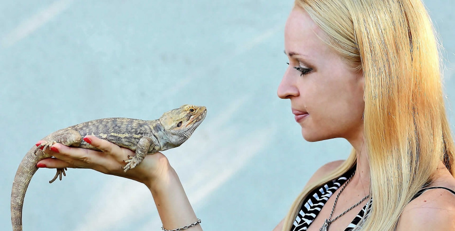 National Reptile Awareness Day in USA in 2021
