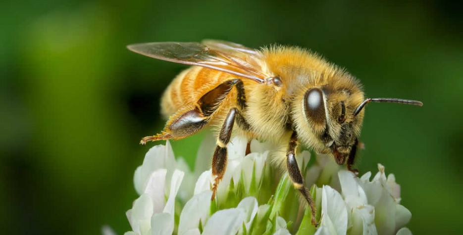 World Bee Day  in United Nations in 2021