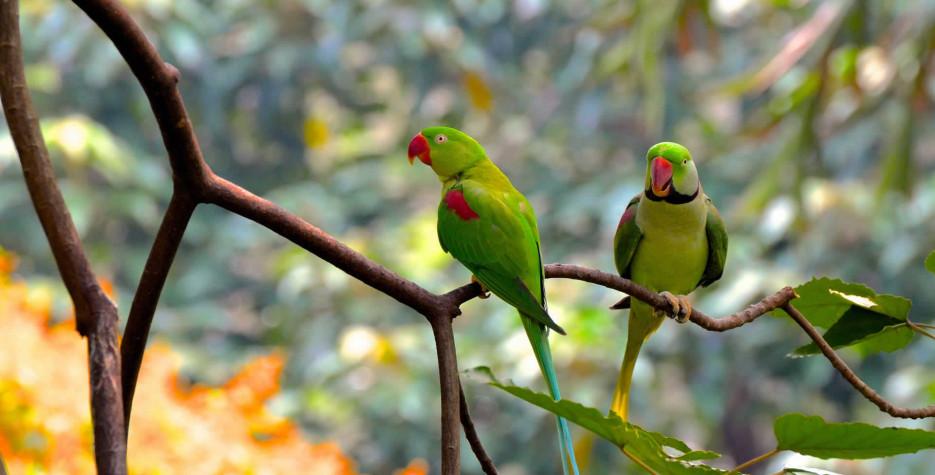 National Bird Day around the world in 2022