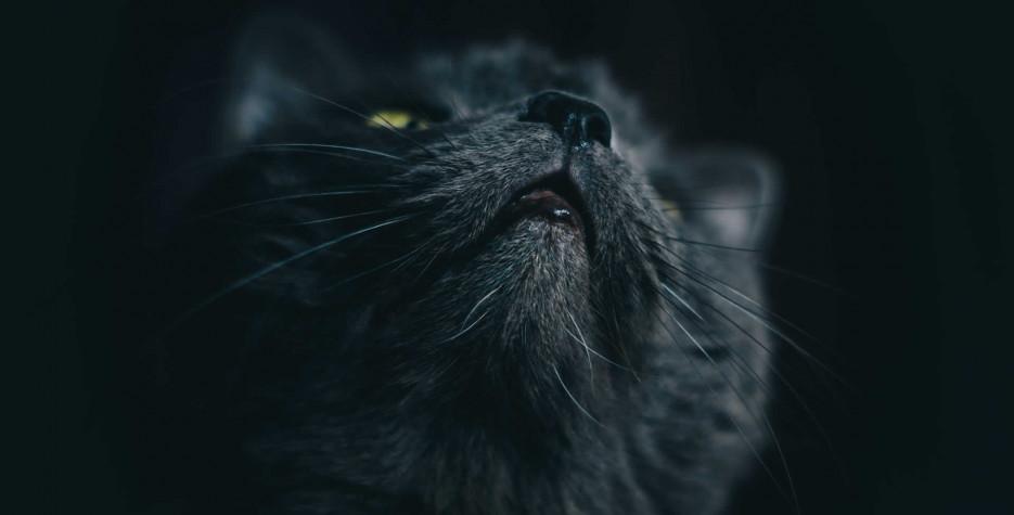 National Black Cat Day in USA in 2021