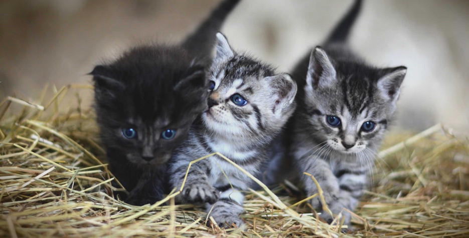 Cat Herders Day in USA in 2021