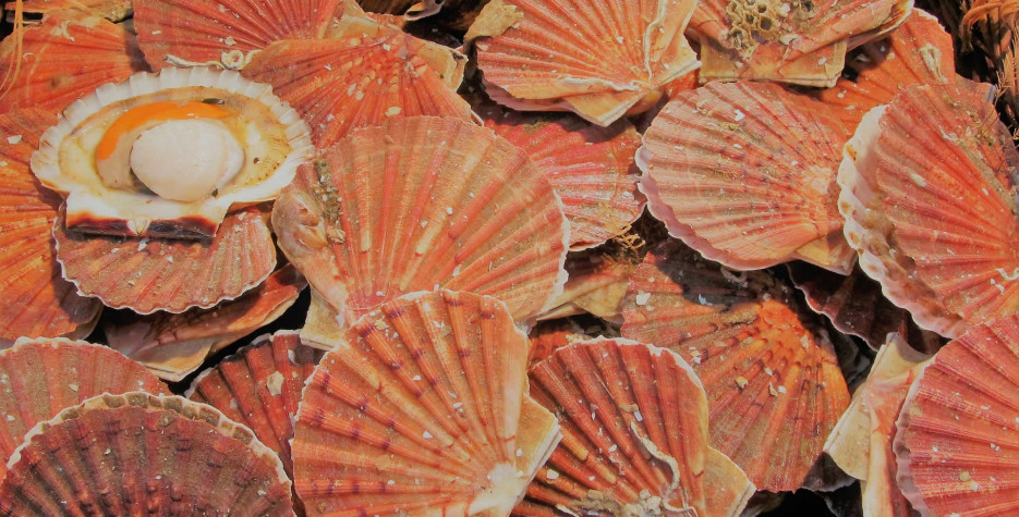 National Coquilles Saint Jacques Day in USA in 2022