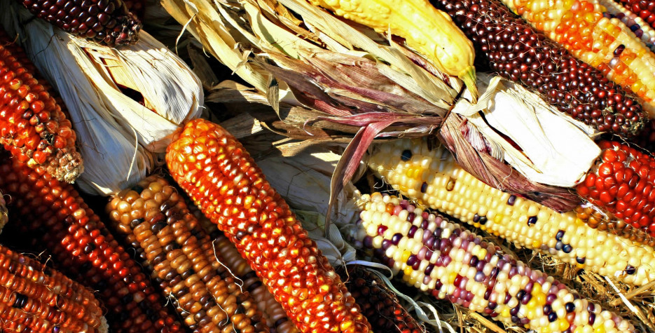 Maize Day in USA in 2021