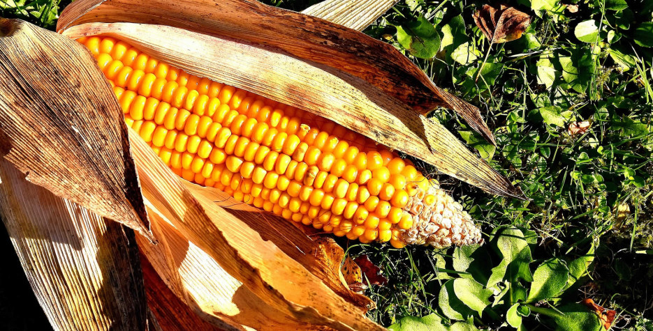 National Corn on the Cob Day in USA in 2022