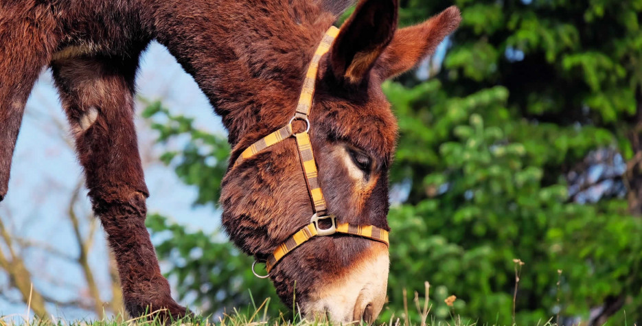 National Mule Day in USA in 2021