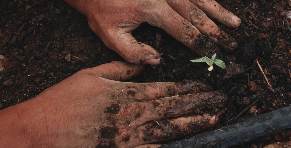 National Gardening Exercise Day in USA in 2022