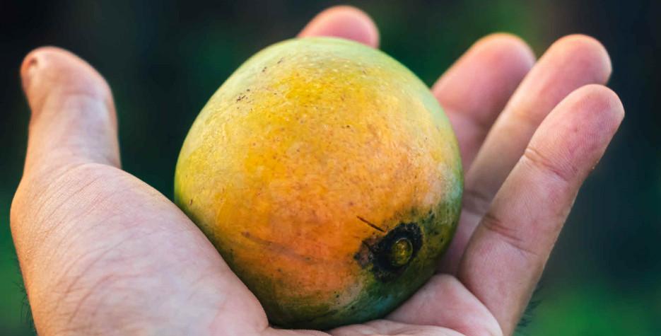 World Mango Day around the world in 2021
