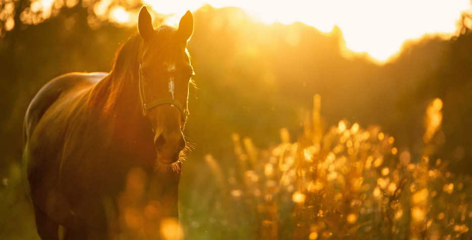 National Horse Protection Day in USA in 2022
