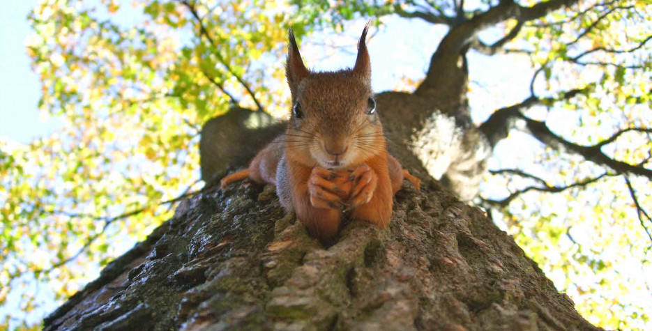 National Grab Some Nuts Day in USA in 2022