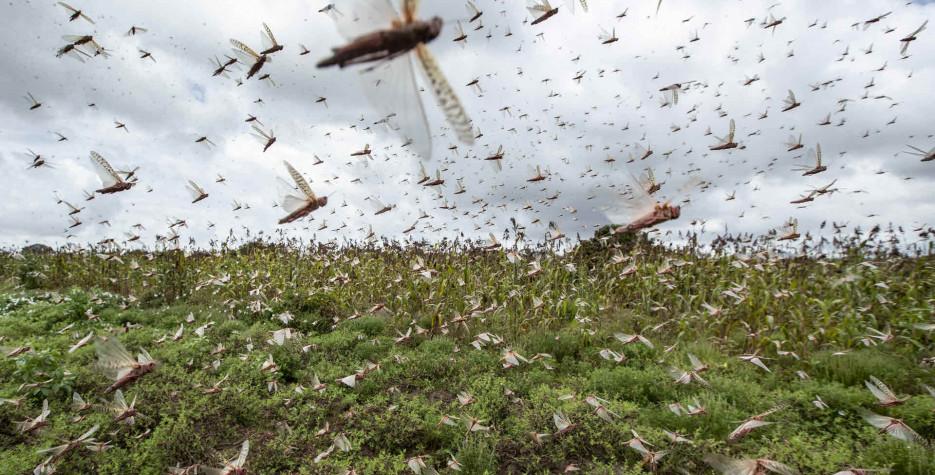 World Pest Day around the world in 2022