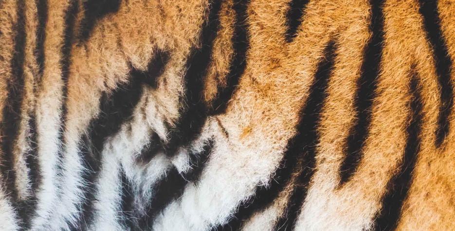 International Tiger Day around the world in 2022