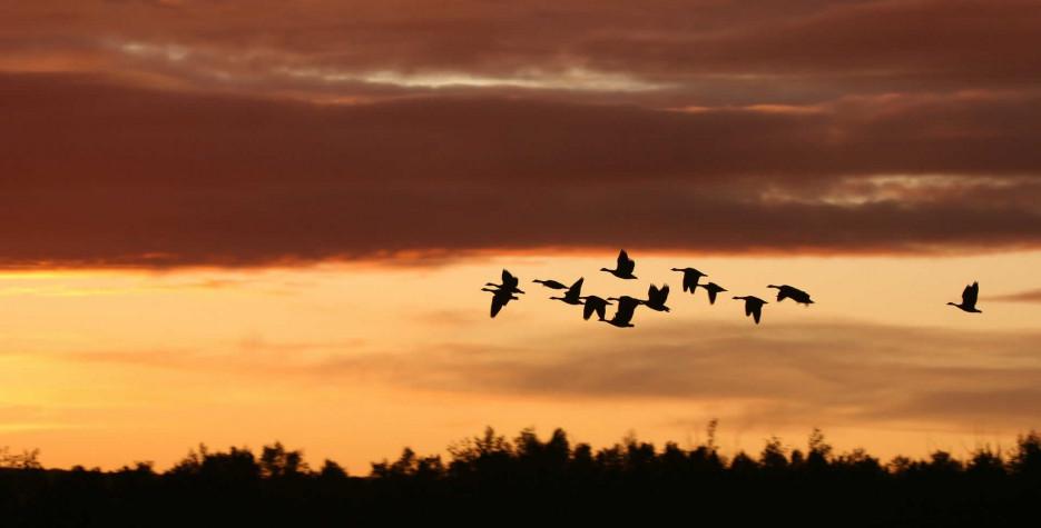 World Migratory Bird Day around the world in 2021