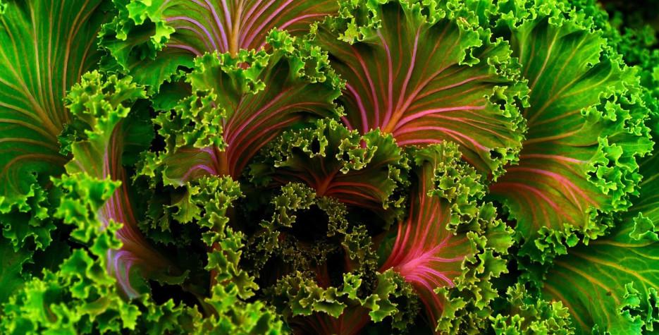 National Kale Day in United Kingdom in 2022