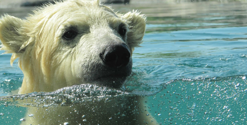 National Polar Bear Day in USA in 2022