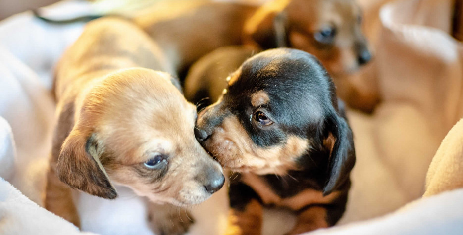 Puppy Mill Awareness Day in USA in 2021