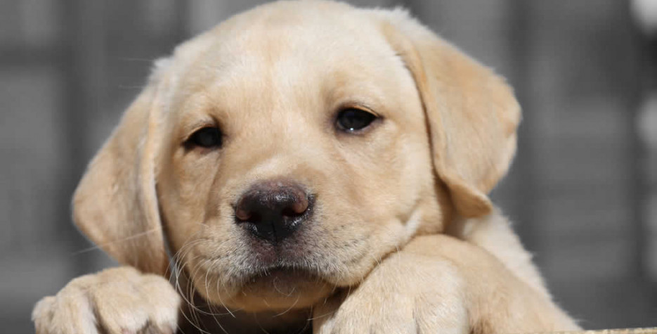 National Puppy Day in USA in 2022