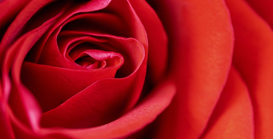 National Red Rose Day in USA in 2021