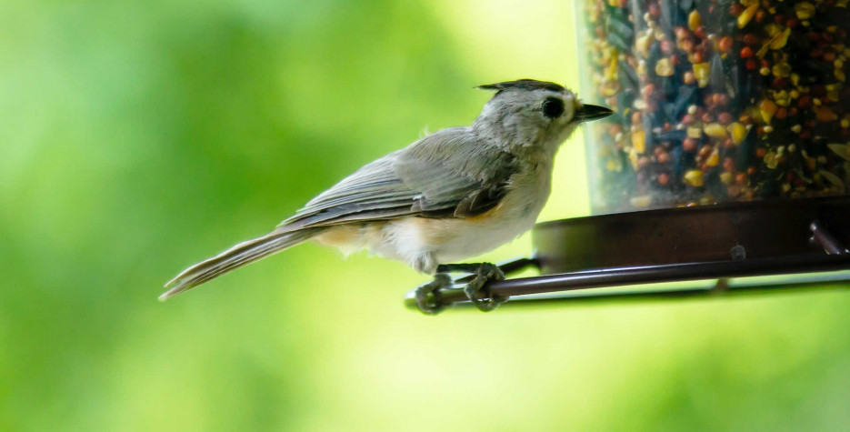 National Bird-Feeding Month in USA in 2022